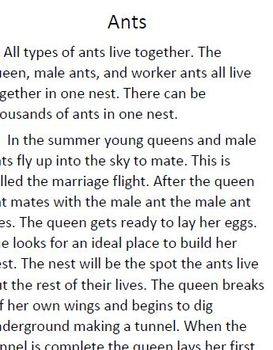 Informational text and comprehension questions for Ants and Bees