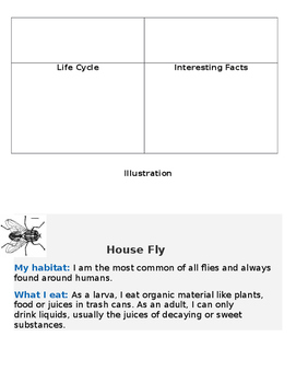 Informative Insect Writing in 2nd Grade