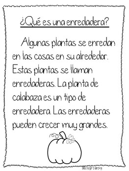 Informative Paragraph Writing in Spanish
