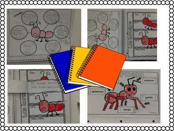 Informative Texts (Close Reading) for Informational Writing (INSECTS) in Spanish