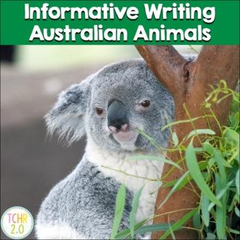Australian Animals Informative Writing Research Kangaroo K