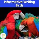 Birds Research