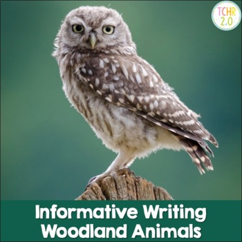 Woodland Animals Informative Writing Research Owl Porcupin