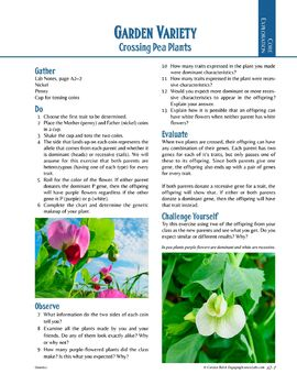 Inherited Traits—Crossing Pea Plants—A coin toss activity