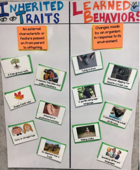 Inherited Traits-Learned Behaviors Interactive Anchor Chart