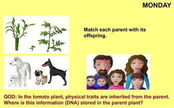Inherited Traits Review