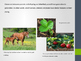 Inherited Traits and Learned Behaviors in Organisms