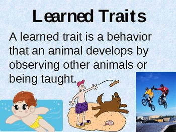 Inherited and Learned Traits Powerpoint