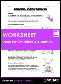 Inner Ear Anatomy - Structure and Function (Equilibrium)