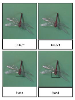 Insect 3 Part Cards