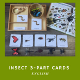 Insect 3-Part Cards English
