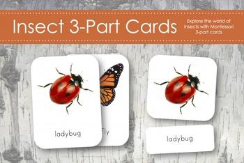 Insect 3-Part Nomenclature Cards- Montessori