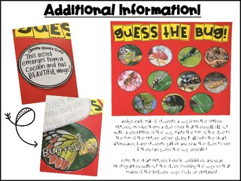 Insect Activity