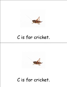 Insect Alphabet student book
