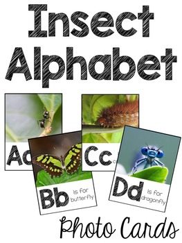 Insect Alphabet Photo Cards