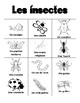 Insect BINGO in French