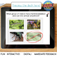 Insect BOOM Cards™ Task Cards - Real Photos!
