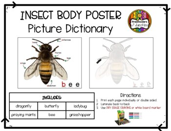 Insect body part poster set by preschoolers and sunshine tpt insect body part poster set ccuart Images