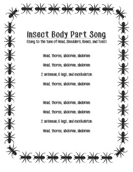 Insect Body Part Song