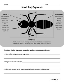 Worksheets Insect Body Parts Worksheet insect body parts diagram by heidi wagner teachers pay worksheet