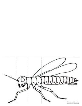 Insect Body Parts Foldable