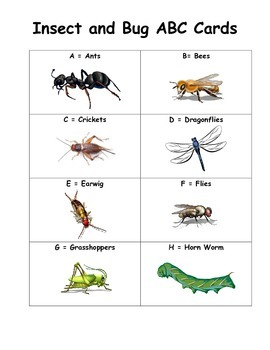 Insect & Bug ABC Cards