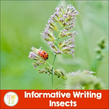 Insects Research