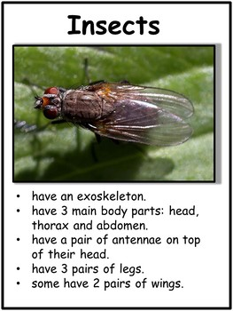 Insect Bundle - Lesson Plan, Photos, Worksheets and Activities