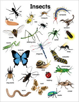 Insect Charts