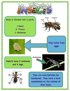 Insect Classification Poster