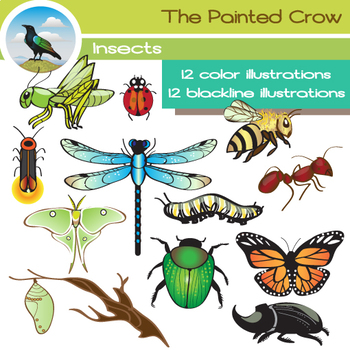 Insect Clip Art - Bug Clipart -24 Piece Set - Color and Blackline