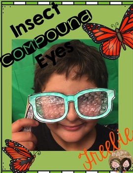 Insect Compound Eyes