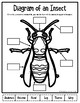 Insect Diagram