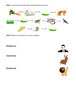 Insect Encounter Unit Assessment