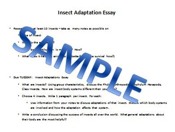 Insect Essay & Rubric - Video Research