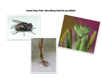 Insect Family Science Night activities