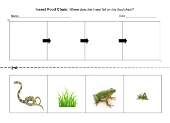 Insect Food Chain Exit Ticket