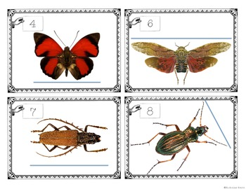 Insect Inches Measurement Task Cards