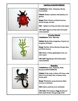 Insect Information Cards