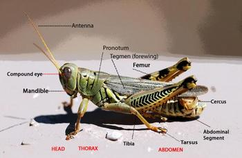 Insect Introduction and Attention Getter