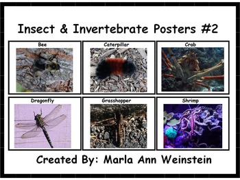 Insect & Invertebrate Posters #2