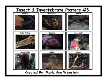 Insect & Invertebrate Posters #3