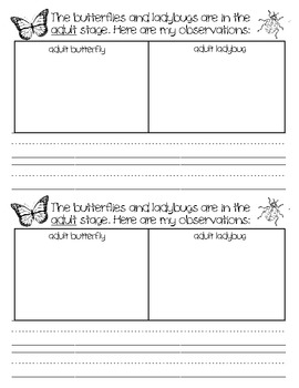Insect Investigation Book - Butterflies and Ladybugs