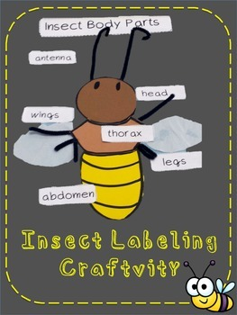 Insect Labeling Craftivity