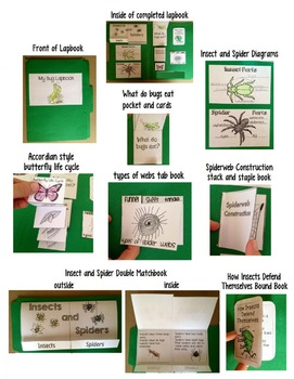 Insect Lap book