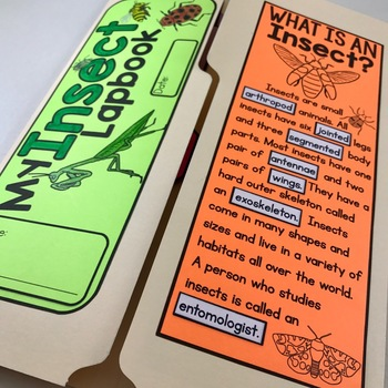 Insect Lapbook and Nonfiction Passages