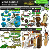Insect Life Cycle Clip Art BUNDLE