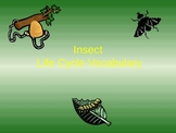 Insect Life Cycle PowerPoint