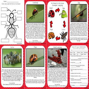Insect Life Cycle Unit and Interactive Notebook