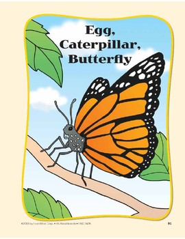 Insect Life Cycles: Circle-Time Book